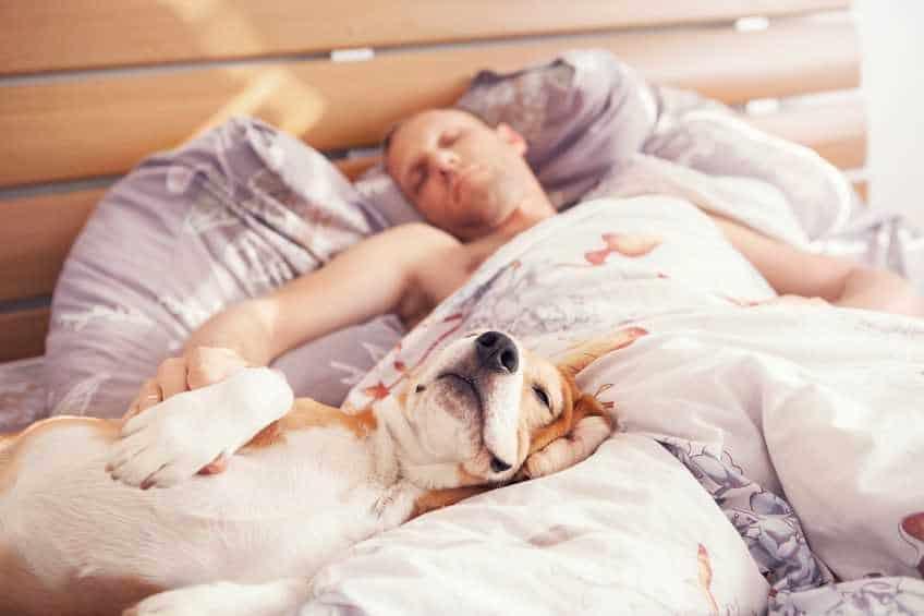 dormir perrito
